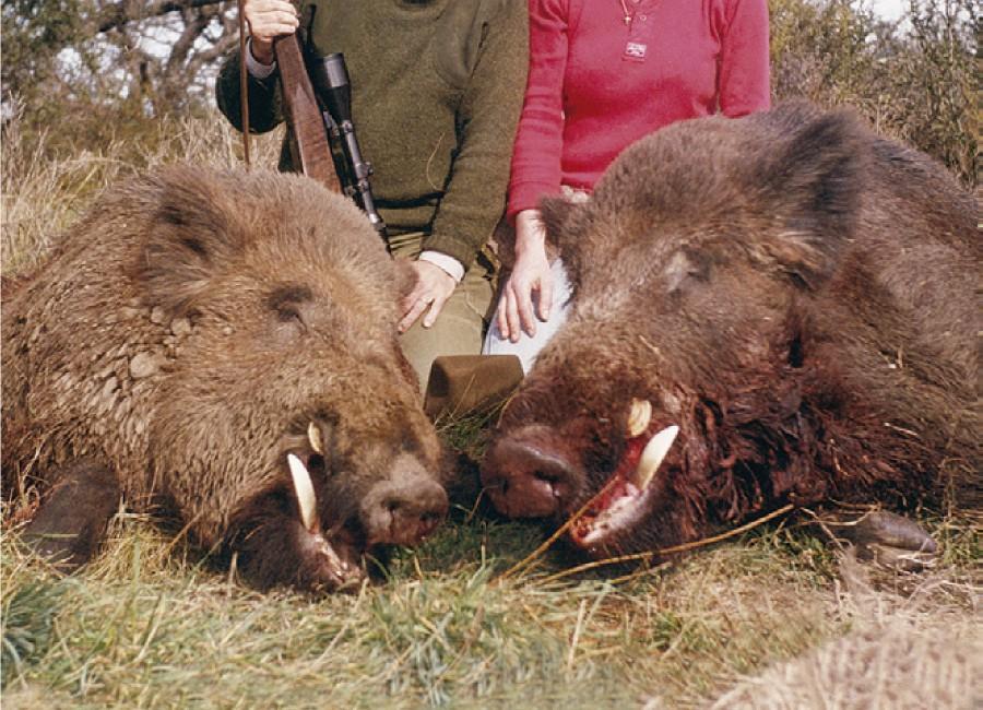 03 - Wild Boar