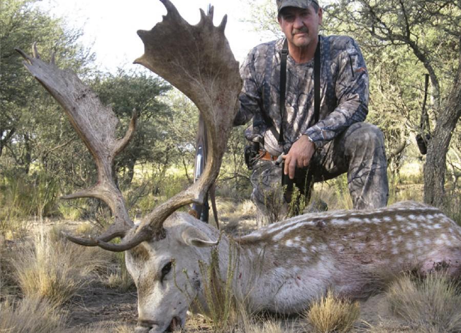 11---Gold-Medal-Fallow-Deer
